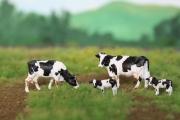 H0 Holsteiner Schwarz, 4 Stück